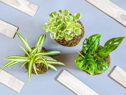 опасные комнатные растения