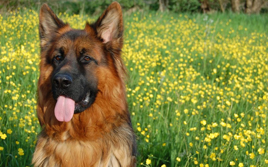 народные приметы про собак