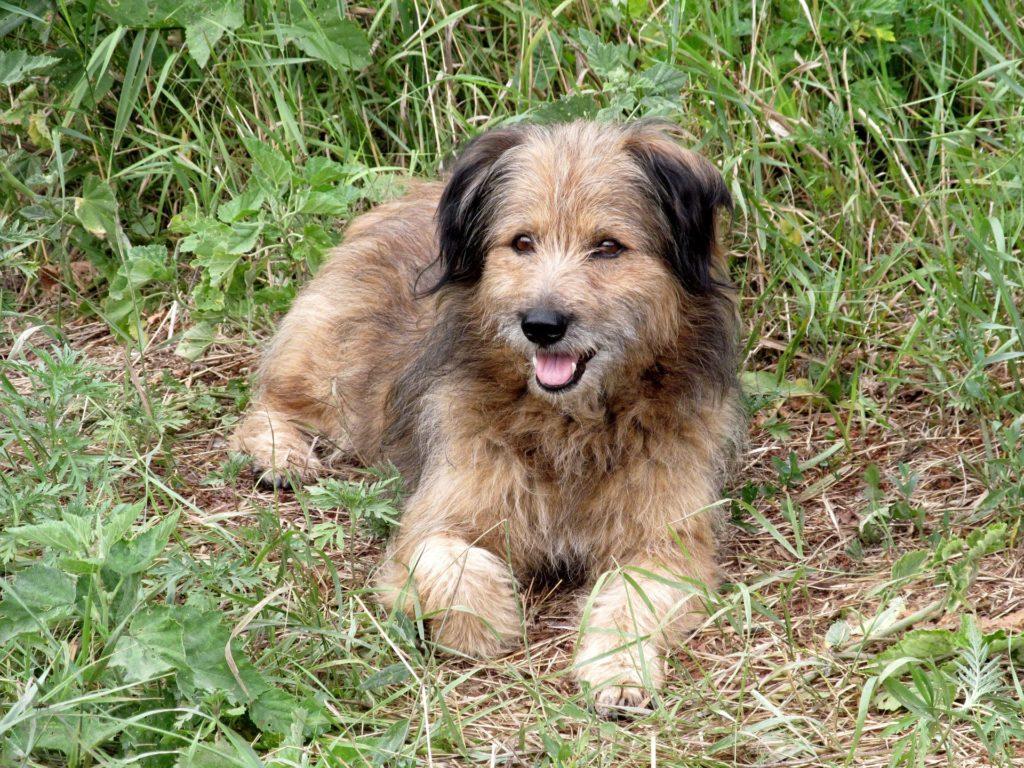 приметы и суеверия про собак