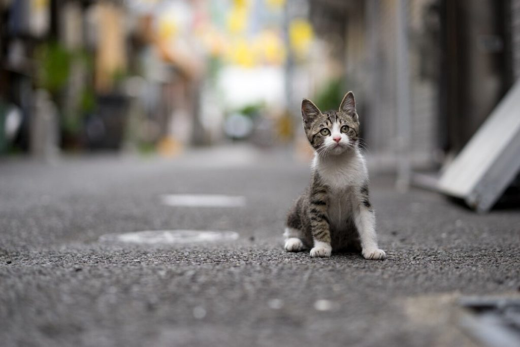 кошка на дороге