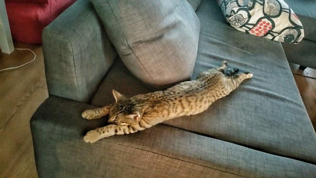 как помочь коту в жару